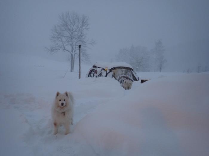一色の森 雪中キャンプ 5_a0049296_18102607.jpg