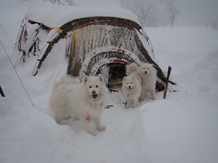 一色の森 雪中キャンプ 5_a0049296_18104180.jpg