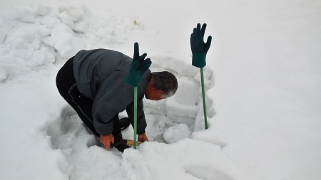 雪の下の大根  2018.02.16_c0213599_19255149.jpg