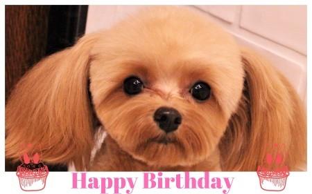 Happy Birthday ♡ チャッピーちゃん_d0060413_11404204.jpg