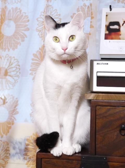 猫のお留守番 たらくん編。_a0143140_22574335.jpg
