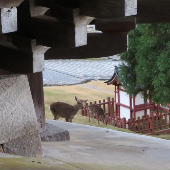 たまには真面目な写真を載せていくスタイル 奈良市にて_c0001670_17445787.jpg