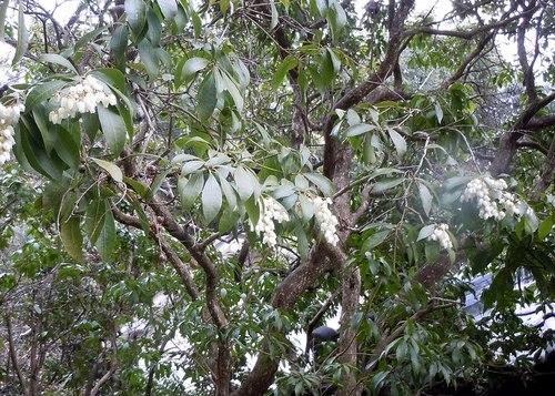 路傍の花、樹々の鳥(196) ~ 梅も山茱萸もまだまだですが ~ _b0102572_23292266.jpg