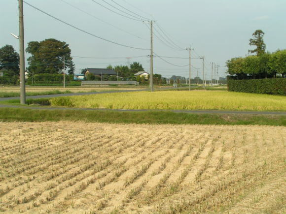稲刈り_a0268377_13111356.jpg