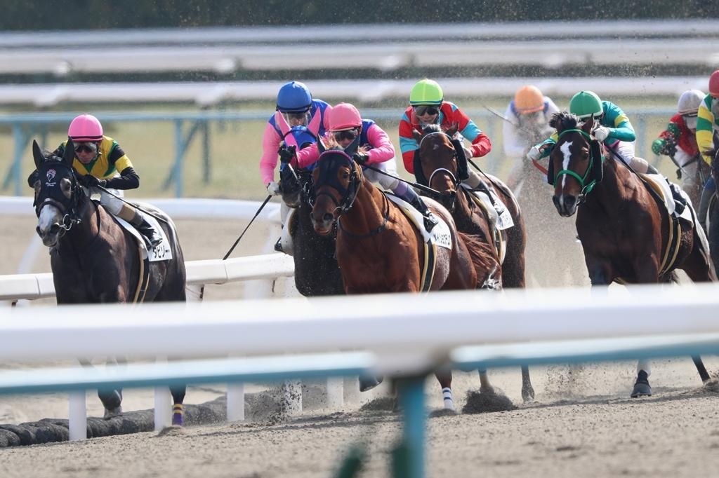 2018年2月17日 京都牝馬S(GⅢ)_f0204898_23320716.jpg