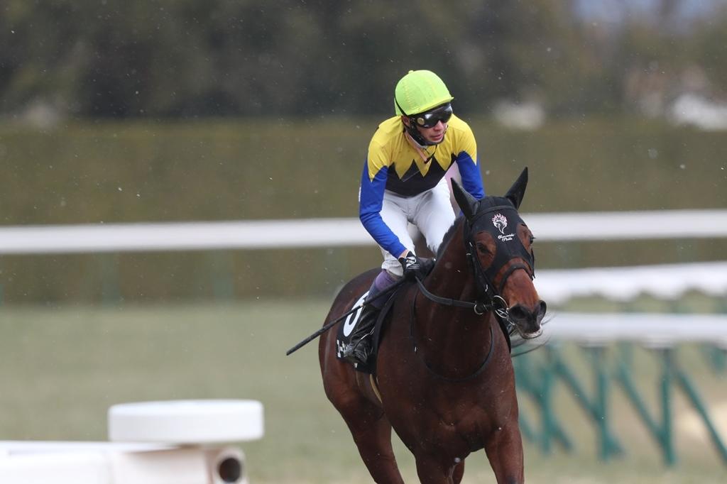 2018年2月17日 京都牝馬S(GⅢ)_f0204898_23324821.jpg