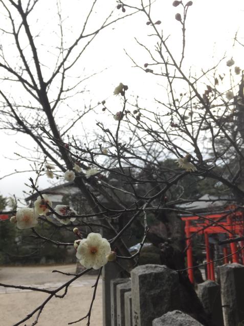 京橋ジェムストーンカフェ Chen ーシアンー へ。そして落語だ☆_c0180209_18283286.jpg