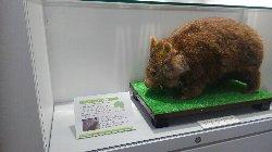 池田駅改札前コンコースにゲストインフォメーション開設_c0133422_14445942.jpg