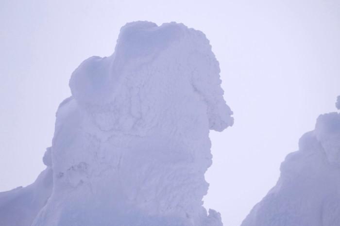 山形県山形市蔵王温泉スキー場    地蔵山頂付近 「樹 氷」_d0106628_10153866.jpg