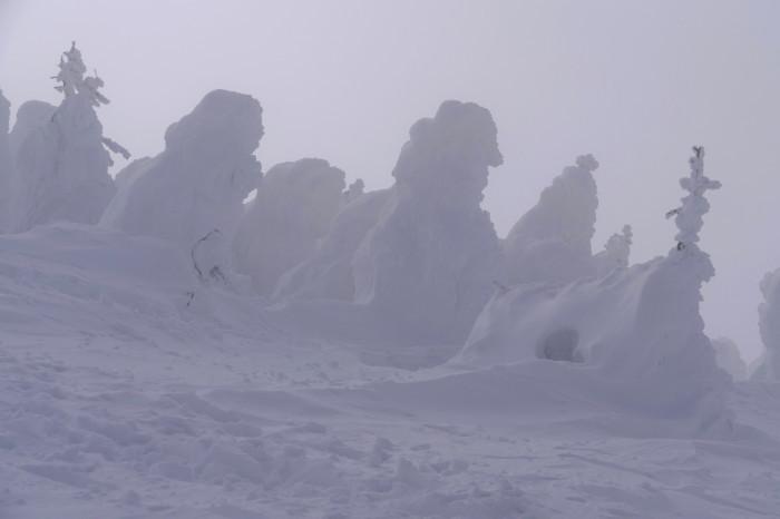 山形県山形市蔵王温泉スキー場    地蔵山頂付近 「樹 氷」_d0106628_10154977.jpg