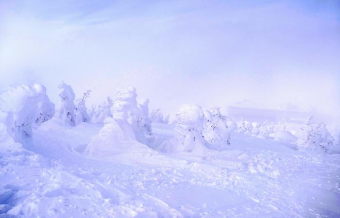 山形県山形市蔵王温泉スキー場    地蔵山頂付近 「樹 氷」_d0106628_10160185.jpg