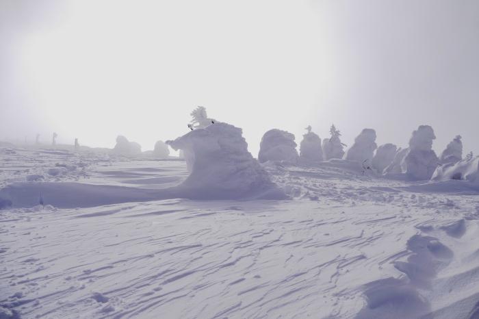 山形県山形市蔵王温泉スキー場    地蔵山頂付近 「樹 氷」_d0106628_10162221.jpg