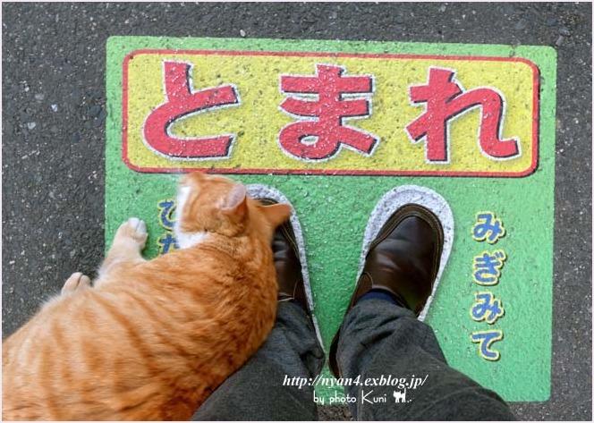 久々の外ネコさん_f0166234_12595093.jpg