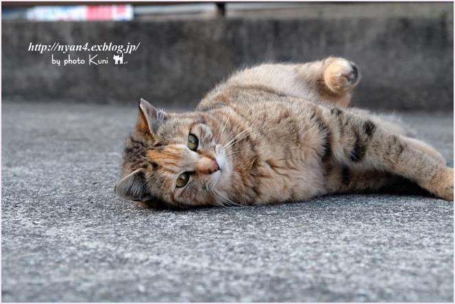 久々の外ネコさん_f0166234_13002673.jpg