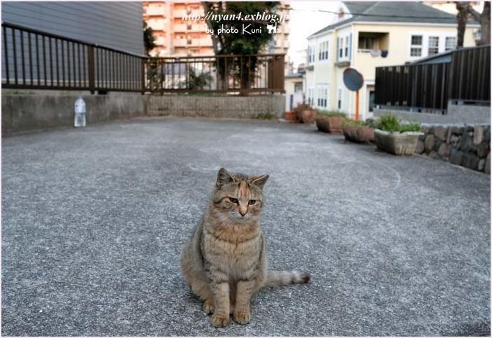 久々の外ネコさん_f0166234_13004422.jpg
