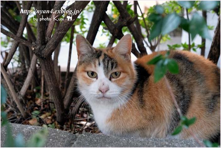 久々の外ネコさん_f0166234_13133605.jpg