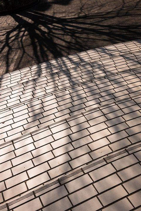 東三河の美術館に棲む光蜥蜴_d0353489_2304411.jpg