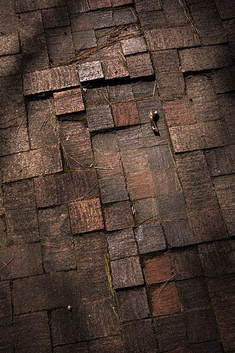 東三河の美術館に棲む光蜥蜴_d0353489_2312023.jpg