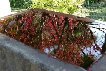 梅を求めて~片瀬江の島、常立寺_c0339296_20004952.jpg