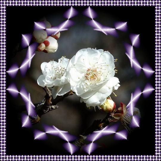 f0132006_13440234.jpg