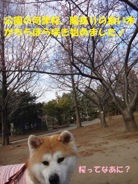 f0121712_15022555.jpg