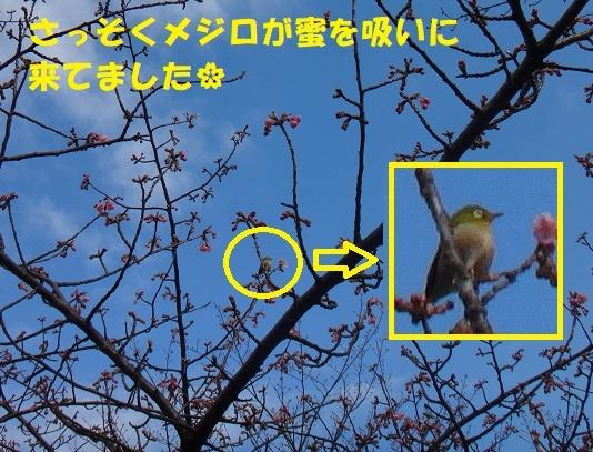 f0121712_15120834.jpg