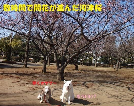 f0121712_15380450.jpg