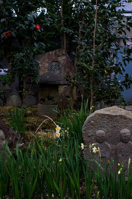 元興寺の花_e0363038_10143982.jpg
