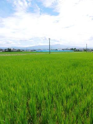 無農薬栽培『米粉』大好評販売中!熊本県菊池市七城町で無農薬栽培のひのひかり100%使用の米粉です!!_a0254656_18345561.jpg