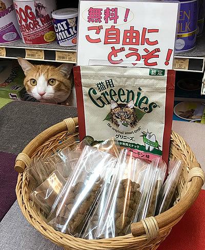 猫用グリニーズ_e0362456_18530810.jpg