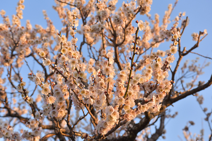 ジロちゃん祭り♪ 好評開催中~ (^o^)_c0049299_22012429.jpg