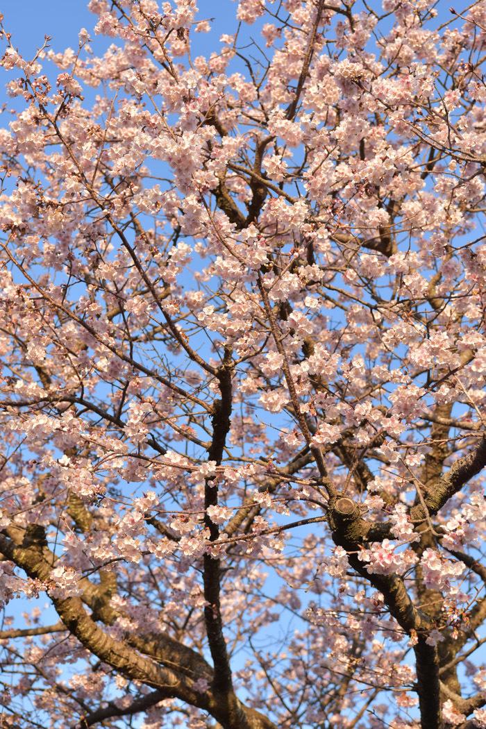 ジロちゃん祭り♪ 好評開催中~ (^o^)_c0049299_22030345.jpg