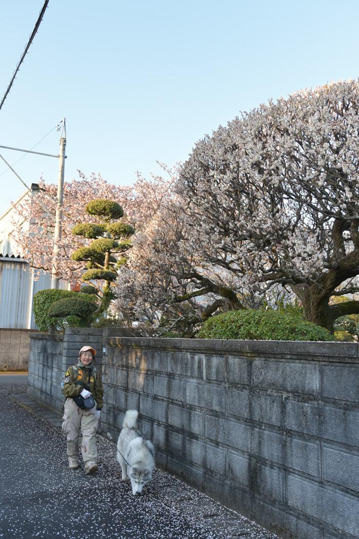 ジロちゃん祭り♪ 好評開催中~ (^o^)_c0049299_22051071.jpg