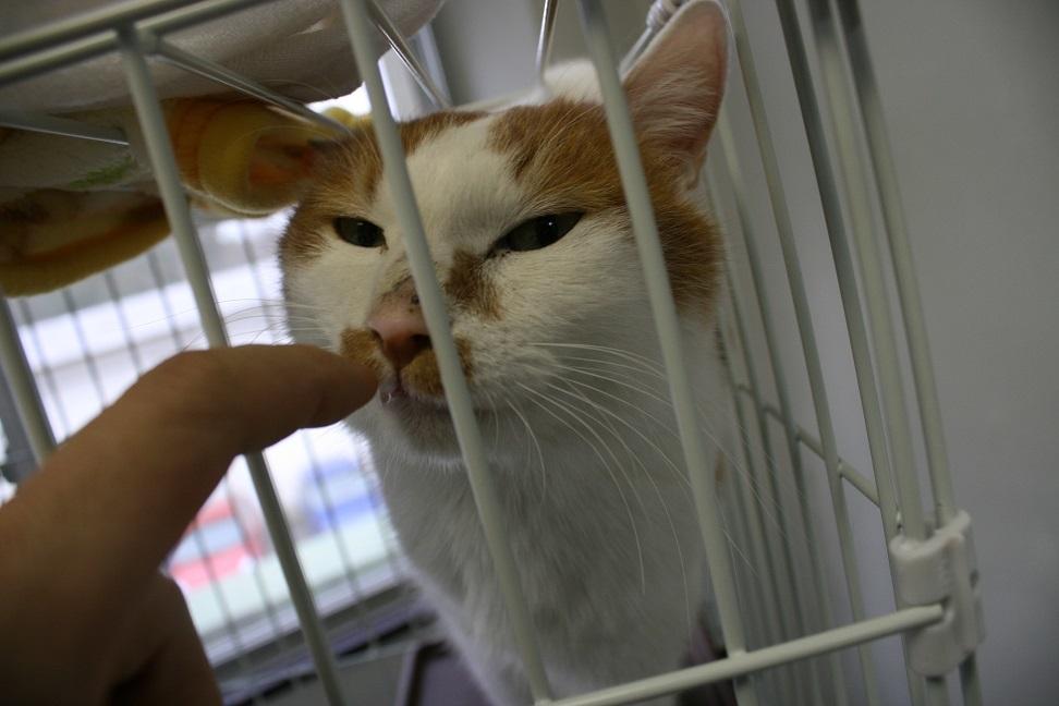 【犬猫・移動先募集】センター(支所)収容(2/17訪問)_f0242002_00082051.jpg