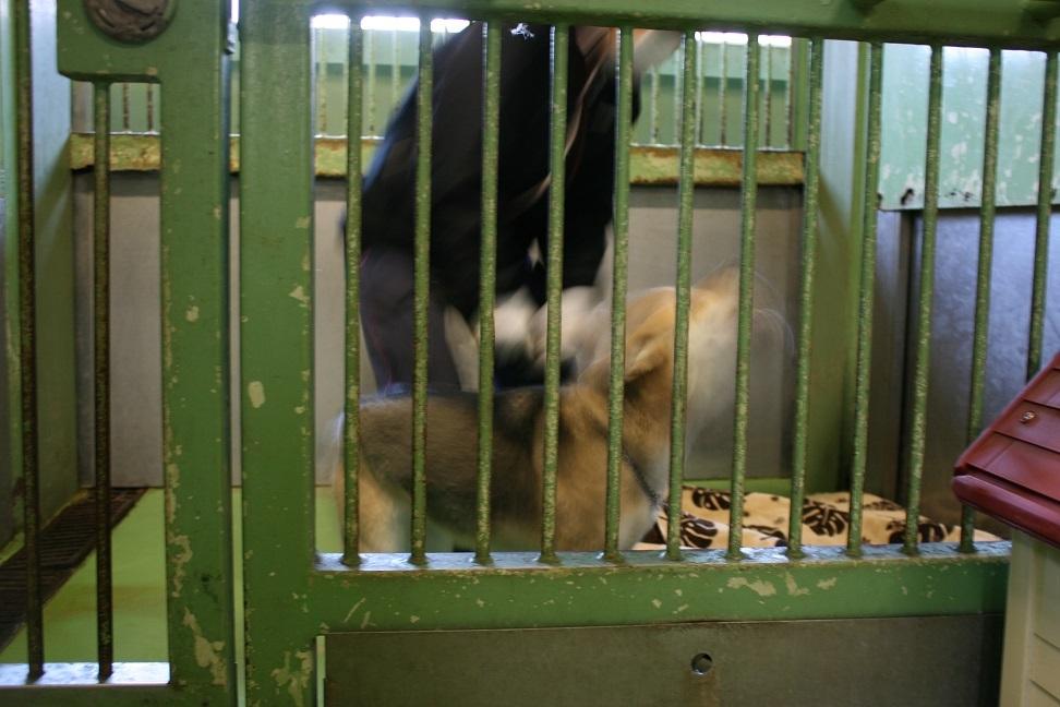 【犬猫・移動先募集】センター(支所)収容(2/17訪問)_f0242002_18572772.jpg