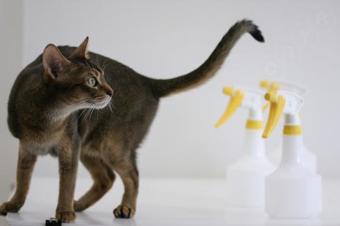 [猫的]不思議_e0090124_21211696.jpg