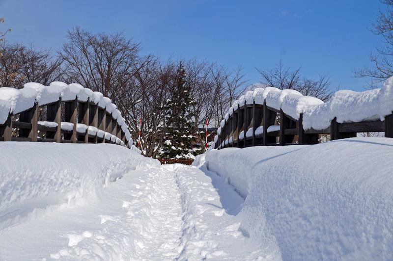 雪景色_d0162994_11060998.jpg