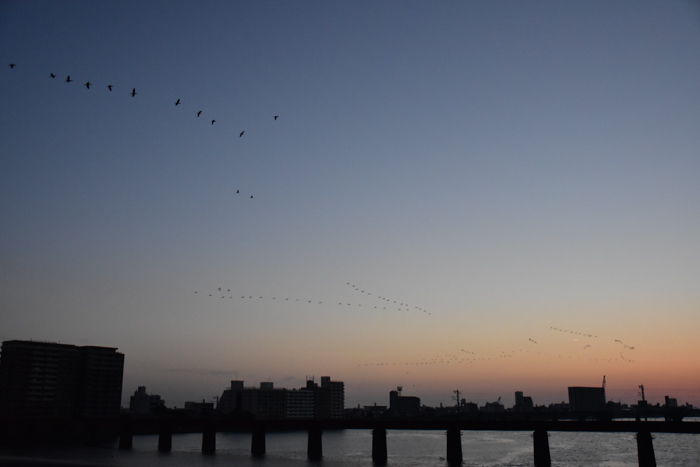 水平線から日の出だよ! そして、春 (*^_^*)_c0049299_22305909.jpg