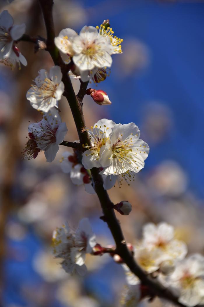 水平線から日の出だよ! そして、春 (*^_^*)_c0049299_22573025.jpg