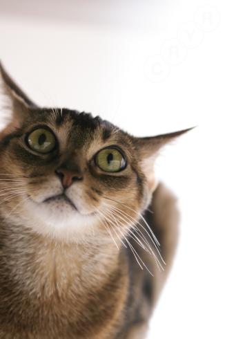 [猫的]クエスチョンマーク_e0090124_22295519.jpg