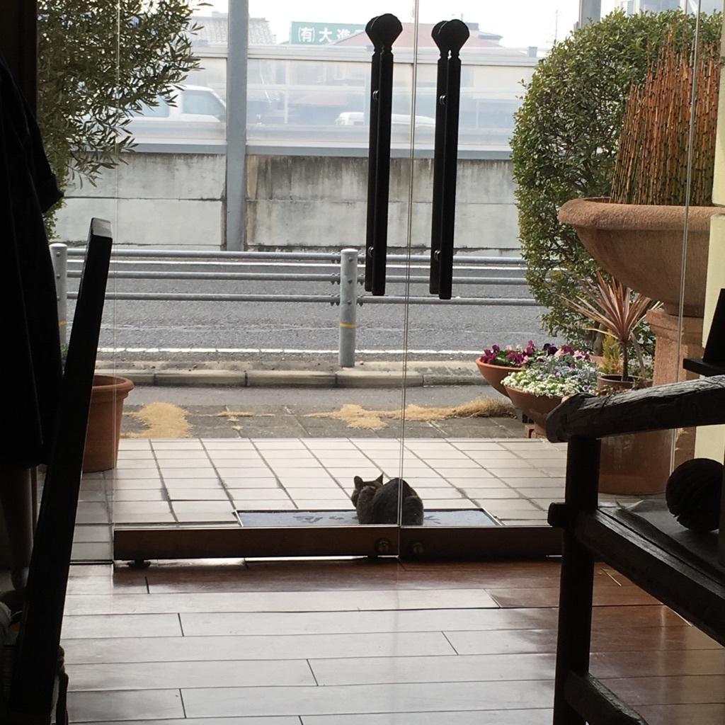 ネコの日。_f0328051_18410203.jpg