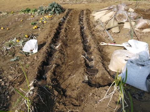 昨年より半月も早くサトイモ第一陣植え付け2・20_c0014967_09100776.jpg
