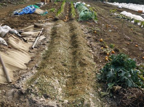 昨年より半月も早くサトイモ第一陣植え付け2・20_c0014967_09103558.jpg