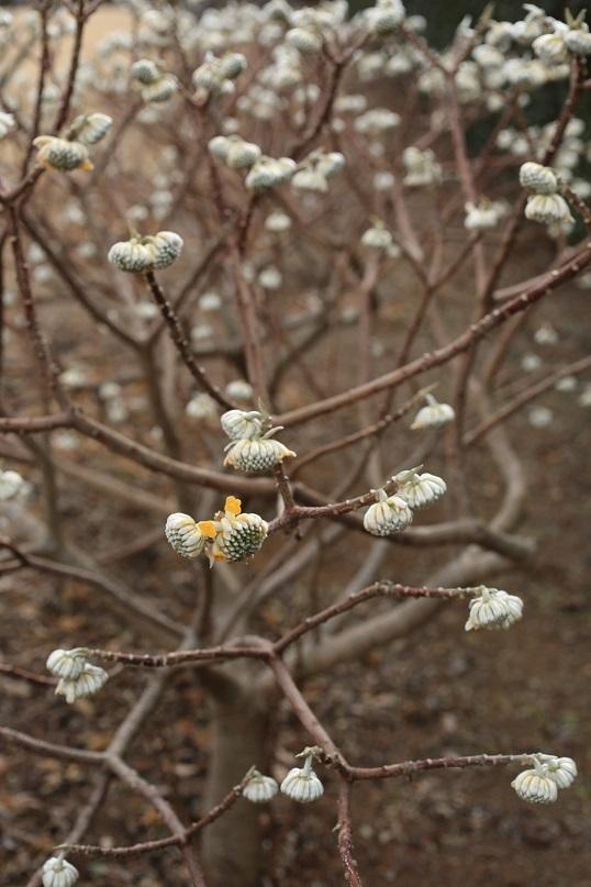 春のヒマワリ?_e0304170_19040463.jpg