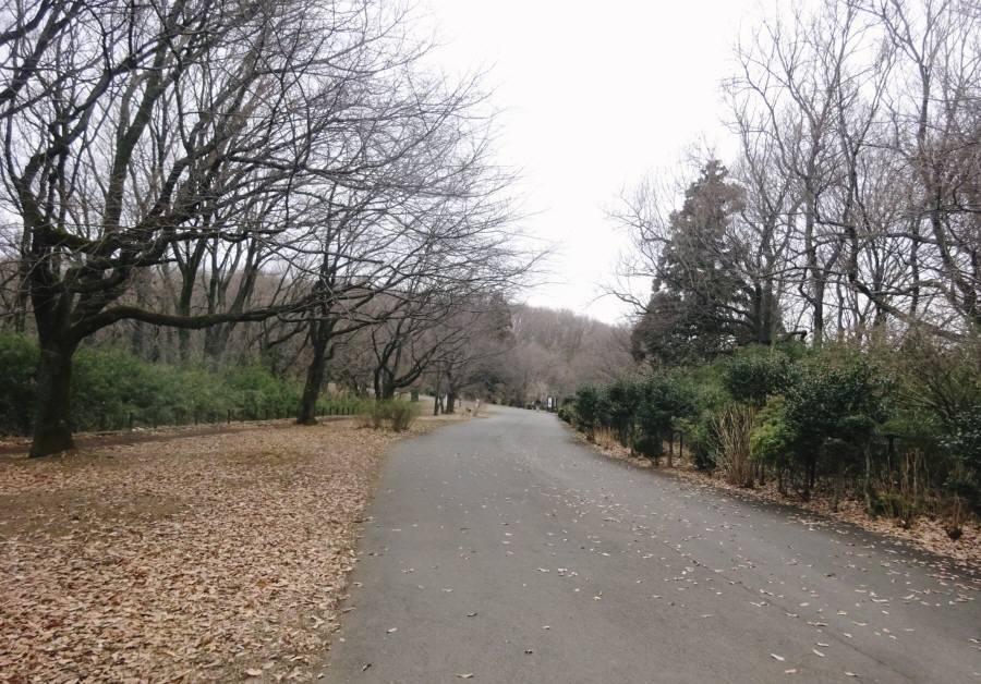 戦車道路にシロハラ_f0059673_23192085.jpg