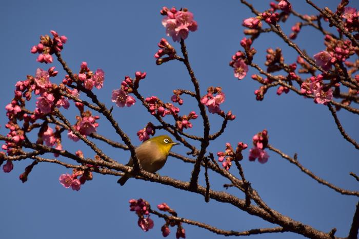 それでも春はやって来る! (^o^)_c0049299_21452426.jpg