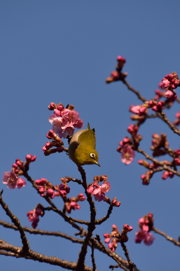 それでも春はやって来る! (^o^)_c0049299_21463841.jpg