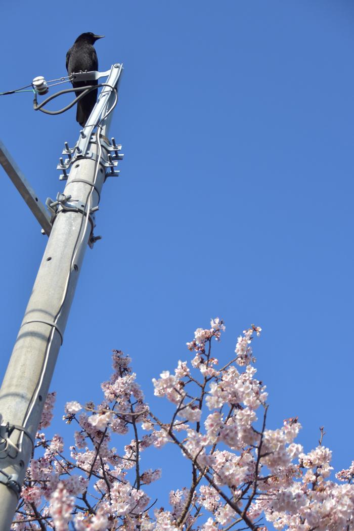 それでも春はやって来る! (^o^)_c0049299_21500961.jpg