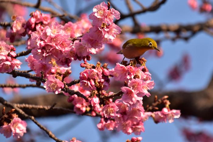 それでも春はやって来る! (^o^)_c0049299_21571637.jpg