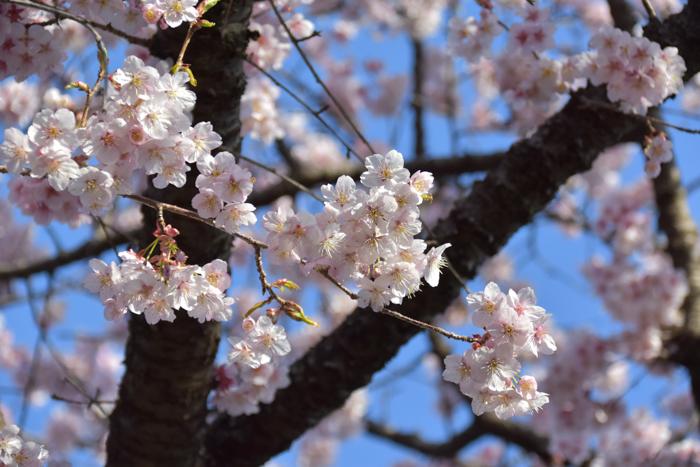 それでも春はやって来る! (^o^)_c0049299_21573485.jpg